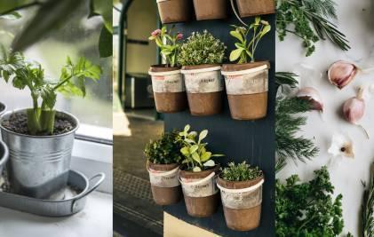 Mazdārziņš virtuvē jeb ko audzēt uz palodzes
