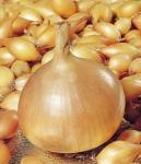 Ziemas sīpoli Shakespeare/ Sīksīpoli (Allium cepa) 0,5 kg